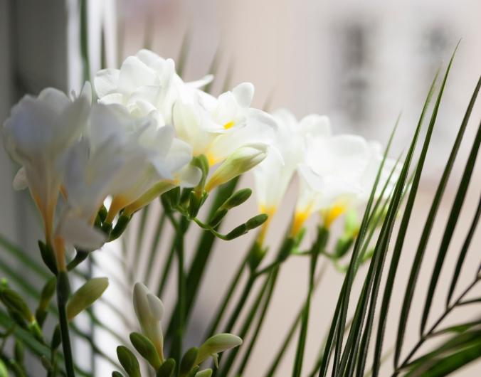 15-flores-blancas-ventana